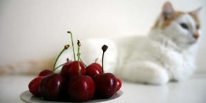 pet food and diet